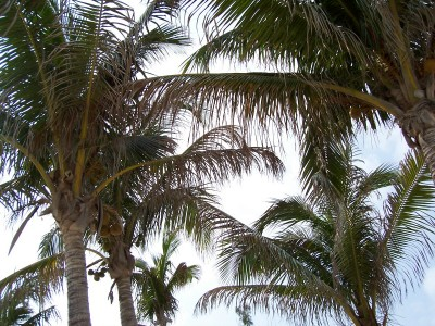 Beautiful palm trees... come sit in the shade!